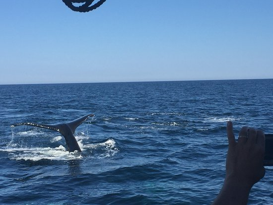 Capt Bill & Sons Whale Watch: photo1.jpg