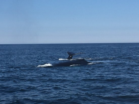 Capt Bill & Sons Whale Watch: photo3.jpg