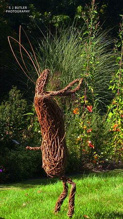 Stillingfleet, UK: Dancing hare