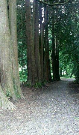 Kilkenny, Irlanda: Voie bordée d'arbres