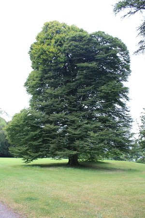 Woodstock House and Gardens: Arbre