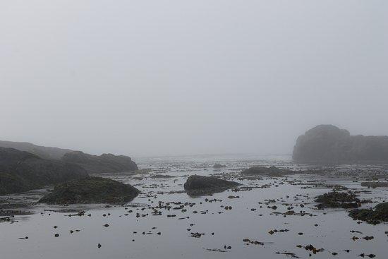 Port Renfrew, Canada : Botany Bay