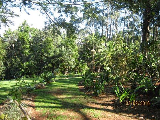 Bangalow, Australien: The tranquil gardens