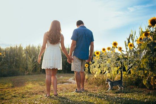 Mount Joy, Pensilvania: Jay's sunflower field.