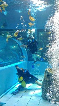 Bueng Chawak Aquarium : Bueng Chawak Chalermphrakiat: P_20160903_112651_large.jpg