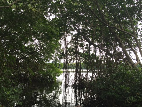 Southern Mexico, Mexico: Manglares de el Manguito, Tonala