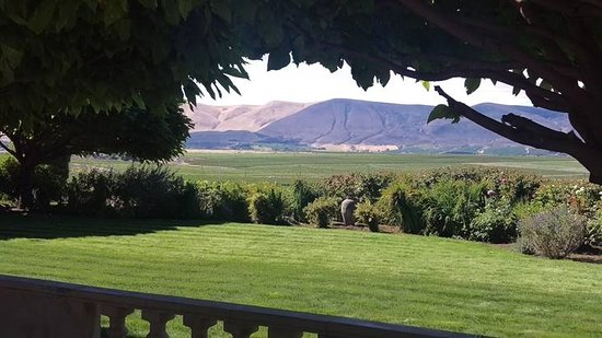 Benton City, WA: View from Hedges Winery
