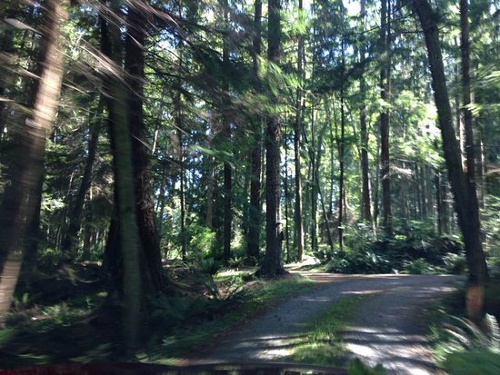 Greenbank, WA: Saying goodbye to the gorgeous forest