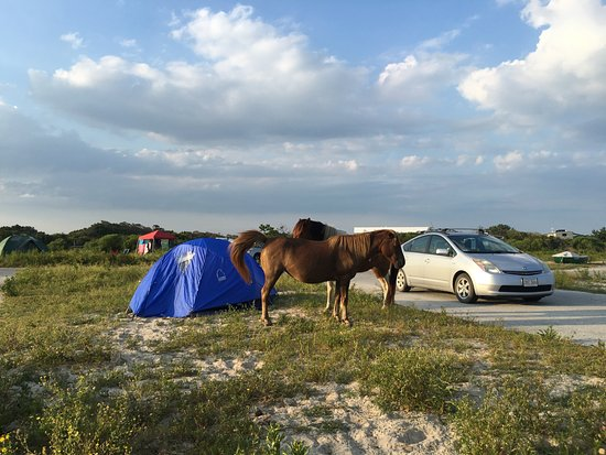 Assateague State Park Camping: Campsite and horses hanging around.