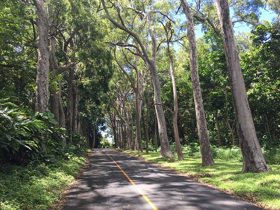 Puu Ualakaa State Park: photo0.jpg