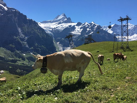 Grindelwald, Switzerland: first