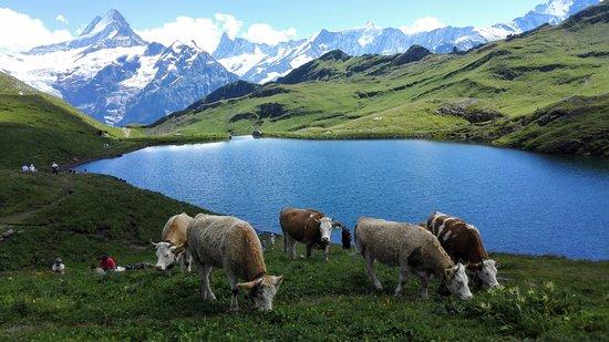 Grindelwald, Sveits: bachalpsee