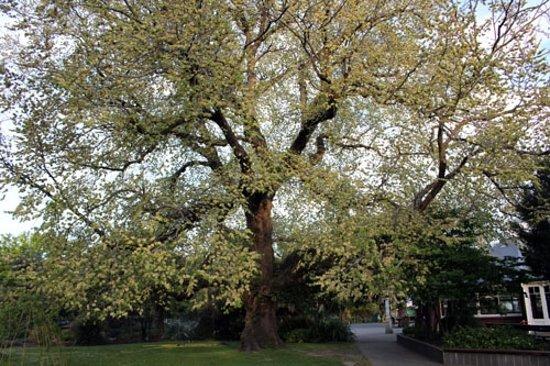 Hagley Park Photo