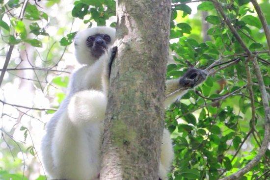 Maroantsetra, Madagascar : NicoToursMasoala Makira TourGuide
