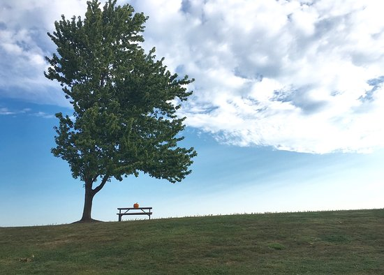 Mount Joy照片