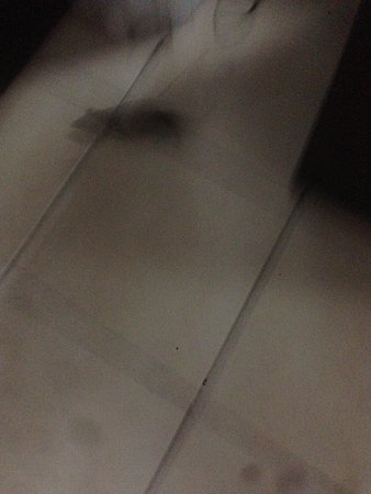 Blue Lagoon Beach Resort: The picture is blurry because of the speed but we can see that there were mice in the room