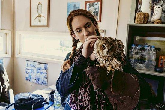 Dublin Falconry: Owl Experience