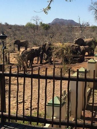 Muweti Bush Lodge: photo1.jpg