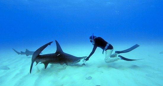Bimini: SharkLab Doc Gruber