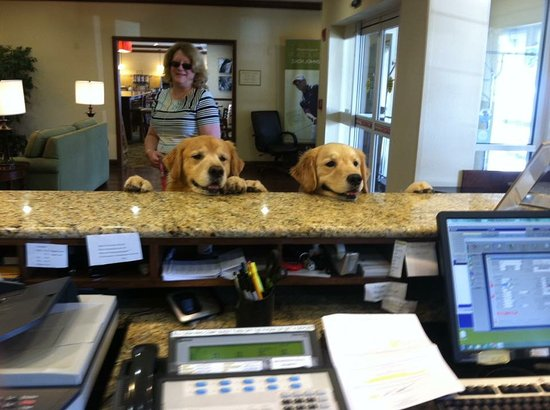 Country Inn & Suites By Carlson, Charleston South: Even our Goldens love the Country Inns and Suites