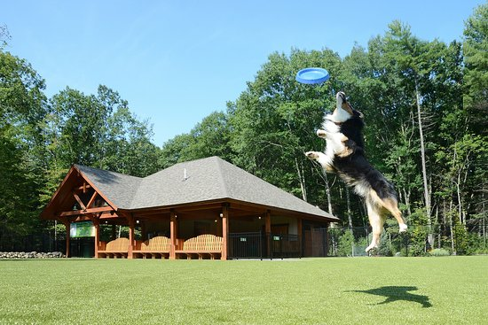 Lake George RV Park : Be sure to visit Charlie's Bark Park