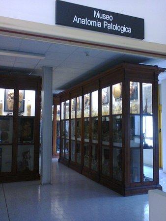 Collezione di Anatomia Patologica e Teratologia Veterinaria