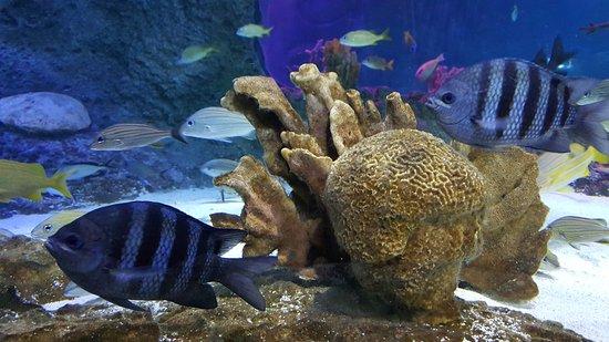 Nurse Shark Picture Of Sea Life Orlando Aquarium