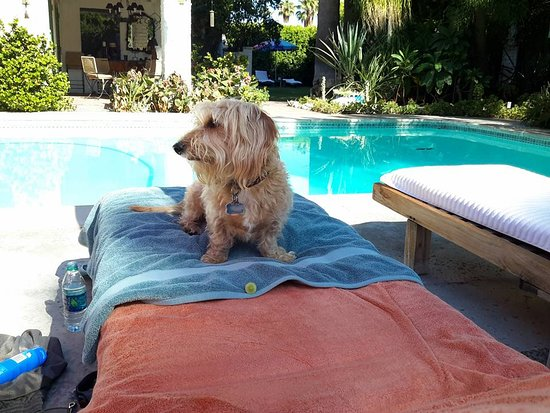 Casa Ocotillo: Our dog enjoying the pool and sun