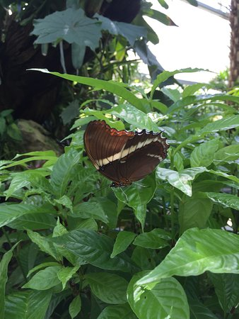 Butterfly Rainforest Photo