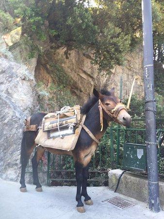 Residence Villa Degli Dei: Burro que nos llevó las valijas