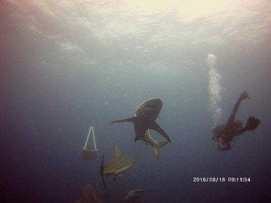 Shelly Beach, Republika Południowej Afryki: baited