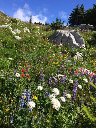 Big White, Canadá: A rainbow of wildflowers in August on Falcon Ridge Trail