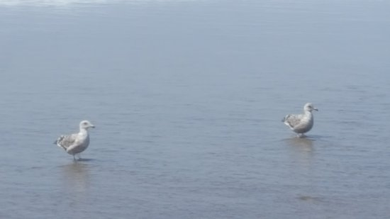 Cloverdale, Όρεγκον: It's never too cold for seagulls to enjoy the water..