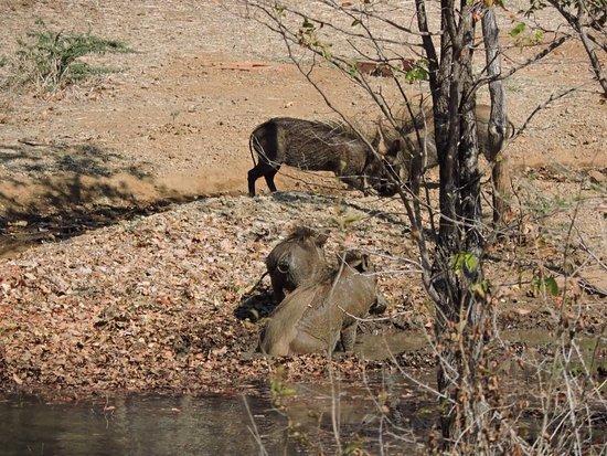 Victoria Falls Safari Club Photo