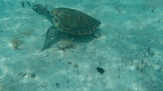 Foto de Beachcomber Grand Cayman