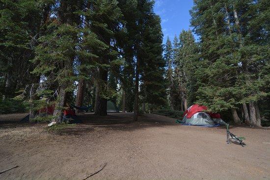 Dorst Campground: Site 51