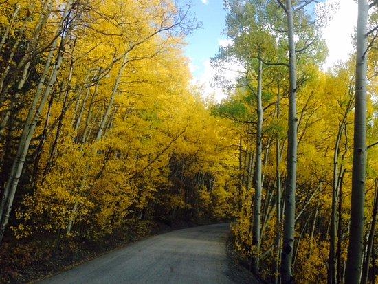 Boreas Pass Road: Fall on Boreas Pass