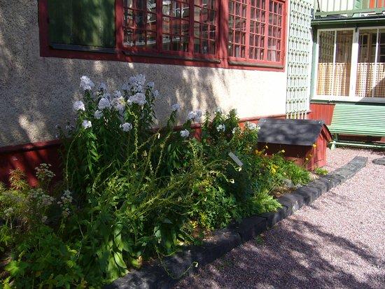 Falun, السويد: Längs huset de original växterna