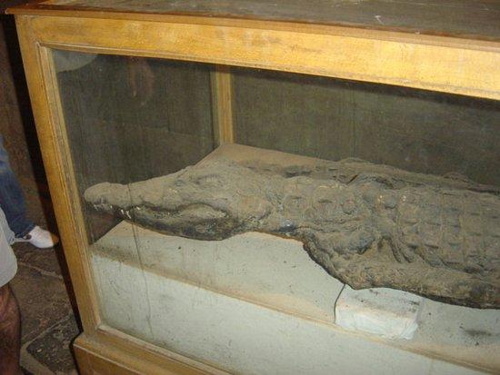 Kom Ombo, Ägypten: Momia dios Cocodrilo