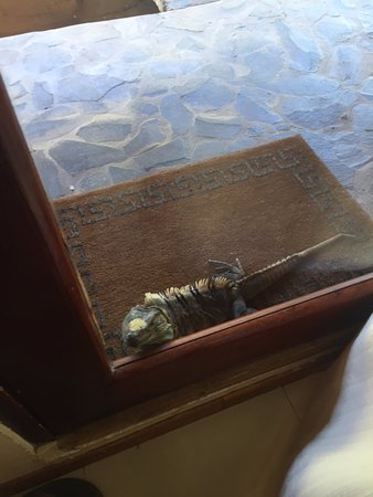 """Hotel Arco Iris: Daily visit from one of the """"locals""""!"""