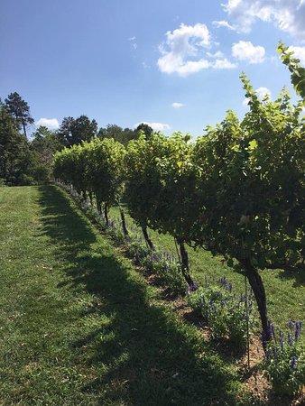 North Garden, Wirginia: photo3.jpg