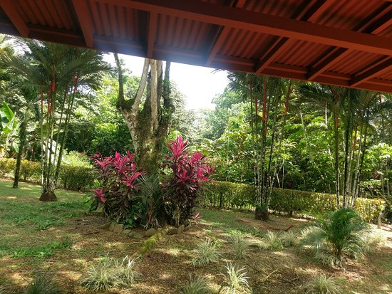 Pavones, Costa Rica: The back yard at Casa teca, seen from the deck.
