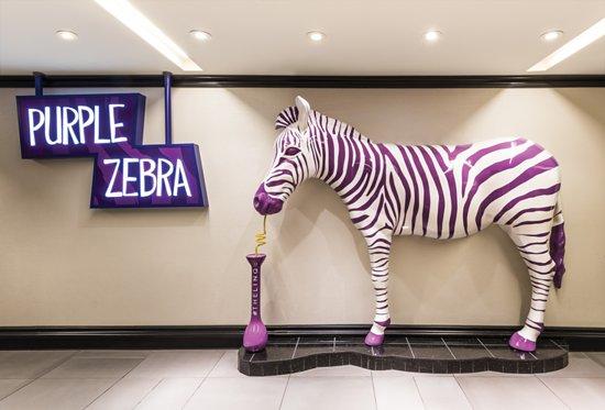 Казино зебра госпожа удача казино