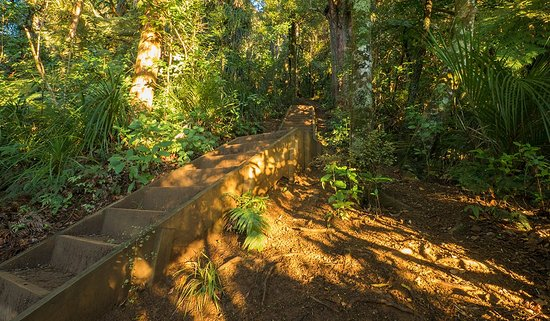 Whangarei, Nueva Zelanda: Some of the many stairs