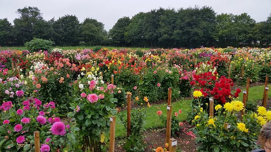 National Dahlia Collection