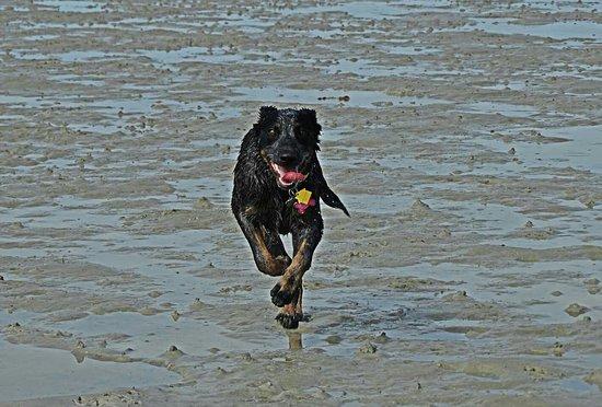 Dog Beach: FB_IMG_1473285442554_large.jpg
