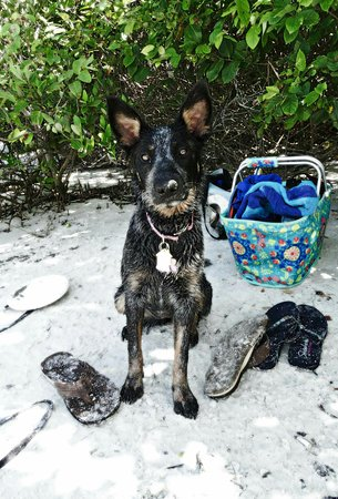 Dog Beach: FB_IMG_1473285432558_large.jpg