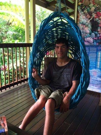 Cow Bay, Australia: Youki in a basket @ front balcony