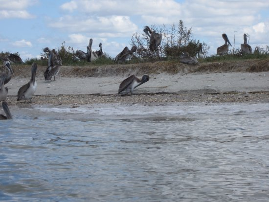 Nature Adventures Outfitters: birds on Crab Island