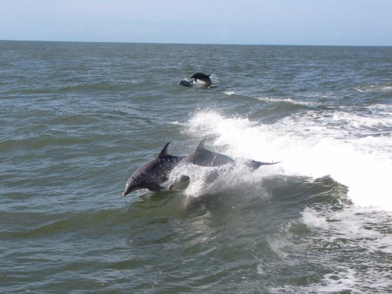 Thundercat Dolphin Watch: The dolphins came out to the boat after a while, and stayed for 15+ minutes